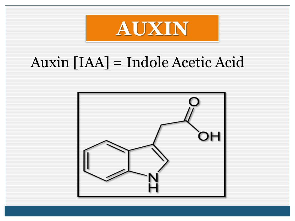 Auxin [IAA] = Indole Acetic Acid
